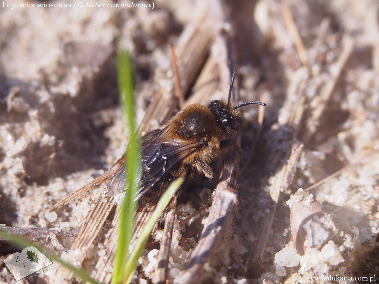 colletes0317